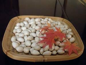 超特価!2kg 秋の味覚 採れたて 中粒銀杏ぎんなんF 鹿児島県産1000円