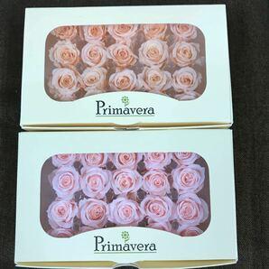 べべのバニラピンクとライトピンク primaveraプリマヴェーラ プリザーブドフラワー