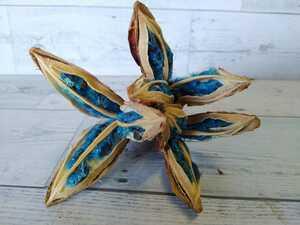 熱帯樹木 オオバショウ 横幅:14cm タビビトノキ 種 1房 青い種 珍しい きれい 旅人の木  たびびとのき  ②