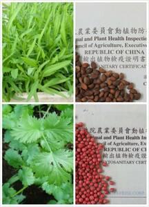 ★野菜種子★空芯菜種5g と パクチー種5g