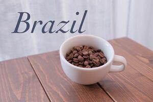 コーヒー豆 ブラジル ショコラ スペシャルティ Rabbit village
