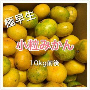 愛媛県産 訳あり 極早生小粒みかん 10kg前後 柑橘 みかん