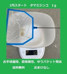 【1円スタート】タマミジンコ 1g(約3,000匹) 【送料込・匿名配送】簡易梱包・ゆうパケット発送