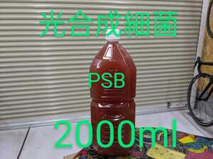 【はとこのメダカ】光合成細菌 PSB 2000ml 針子 稚魚 生存率up メダカ めだか