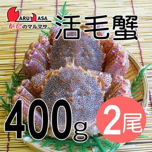 【かにのマルマサ】活蟹専門店 北海道産 活毛ガニ400g 2尾セット