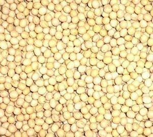 1キログラム (x 1) 北海道産 白大豆 生 1kg 無添加 生大豆