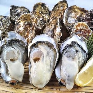 「生食用 殻付き 牡蠣 8kg」【一部条件付き要説明確認】牡蠣 殻付き 牡蛎 牡蠣 殻付 宮城県産 カキ 加熱出荷時は増量タイプで10kg