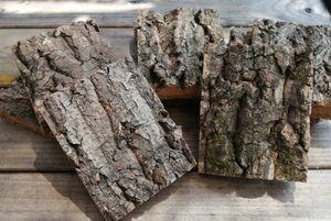5個 特殊コルク 8×10cm(厚約17-20mm)洋蘭 原種 チランジア エアープランツ 熱帯植物 ラン コルク 樹皮