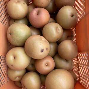 數量限定 福島県産 家庭用 りんご2Kg南水梨2kg サービス