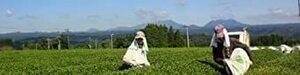 新品宮崎茶房(有機JAS認定、無農薬栽培)、有機紅茶(ティーバッグ2g×30p)、EC86