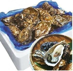 ◎★◎ 牡蠣【新鮮】殻付き牡蠣 生食用 宮城県産 無選別 (5kg 約40-70個)