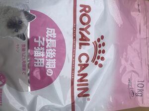 ロイヤルカナン 猫餌 子猫成長後期 10KG