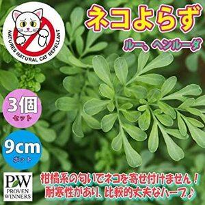 グリーン 9cmポット苗 「ネコよらずハーブ(ルー)」【品種で選べるハーブ苗9cmポット/お買い得3個セット】柑橘系の匂いがし、