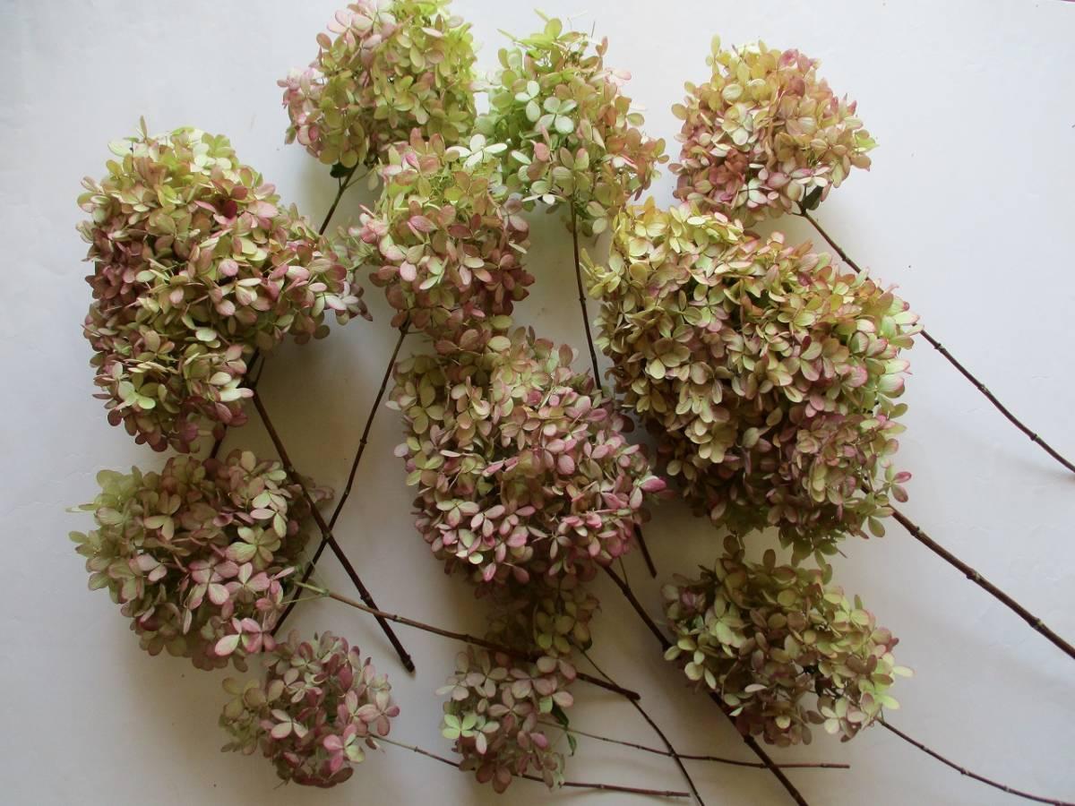 ドライフラワー ★ピラミッドアジサイ★ 12房 茎付き 綺麗なピンク色 ナチュラル そのまま飾っても 87