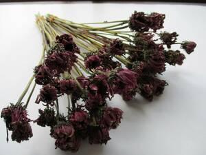 ドライフラワー ★エキナセア★ 60本  リース スワッグなどの花材に 39