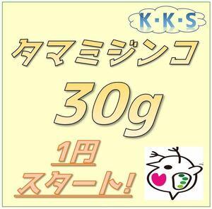 【K・K・S】1円スタート! タマミジンコ 30g 約90,000匹以上(メダカや金魚、熱帯魚の餌に最適です)