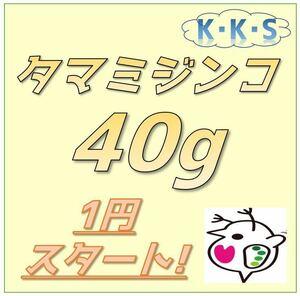 【K・K・S】1円スタート! タマミジンコ 40g 約120,000匹以上(メダカや金魚、熱帯魚の餌に最適です)