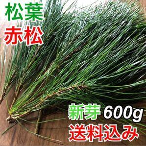 岩手県産 天然 松葉 m00g 新芽 無農薬 松茸の産地 赤松 松葉茶