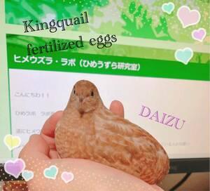 送料無料 ヒメウズラ有精卵 8個 ひめうずら有精卵 卵 うずら ウズラ 商品説明厳守