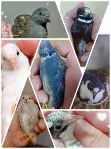 11個 有精卵 ひめうずら有精卵 ヒメウズラ有精卵 ひめうずら ヒメウズラ 卵
