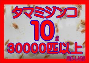 即決【BIO-LABO】タマミジンコ 10g【メダカ・金魚・熱帯魚の餌に!】