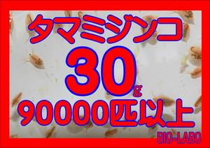 【BIO-LABO】タマミジンコ 30g【メダカ・金魚・熱帯魚の餌に!】