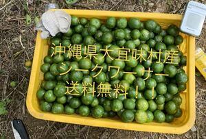 沖縄県大宜味産無農薬シークワーサー約1キロ シークヮーサー