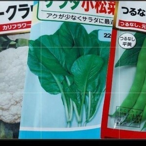 野菜の種3種合計30粒