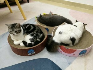 頑丈作り 猫用爪とぎボード 猫用ベッド