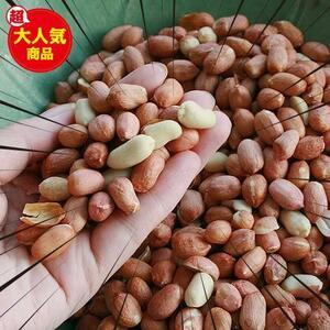 ★サイズ:2袋(合計1kg)★ 【無添加】 アメリカ産 生ピーナッツ (生落花生) 500g入り 2袋 (合計1kg) 訳あり 皮むけ 割れあり