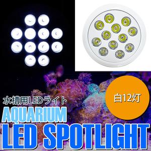 【送料無料~】LED 電球 スポットライト 24W(2W×12)白12 水槽 照明 E26 水草 LEDスポットライト 電気 水草 サンゴ 熱帯魚 観賞魚