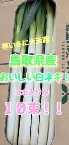鳥取県産!おいしい白ネギ!Lサイズ!3本入り10束!