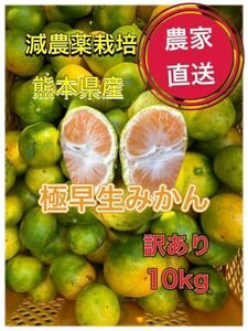 熊本県産 【農家直送】極早生みかん 10kg サイズ混合家庭用!
