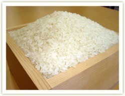 送料無料/ポスト投函/特別栽培米/令和3年産 新潟 新之助 精白米1.8kg/大粒でコクと甘み