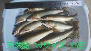 天然鮎 あゆ 冷凍 富山県産 八尾町 19センチ前後 15匹