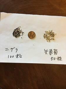 種 ニゲラ100粒 と 矢車菊50粒 ドライフラワー 送63円 E