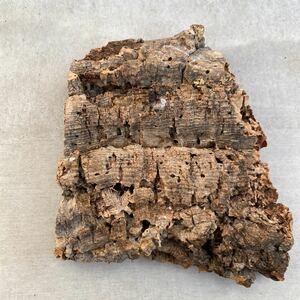 板型 コルク樹皮 エアプランツ エアープランツ チランジア コウモリラン DIY テラリウム 洋蘭 天然素材 爬虫類