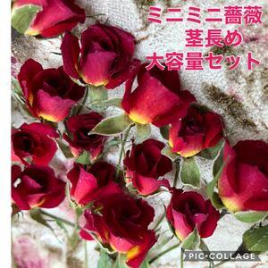 大容量!ミニミニ薔薇(茎長め)30輪+おまけ5輪付き★ミニバラ ドライフラワー花材★ハンドメイド素材★ハーバリウム レジン加工など
