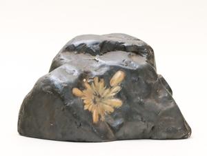 菊花石 1.59kg 置物 水石 鑑賞石