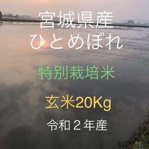 令和2年産 宮城県産 ひとめぼれ 特別栽培米 玄米20Kg 精米可 小分け可