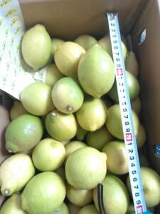 ♪送料無料 国産 温室レモン5kg 高知県産 訳あり 家庭用