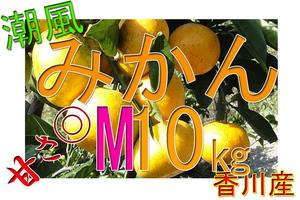 ■潮風みかん 早生 甘い 10㎏ M 送料込 香川産
