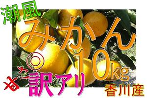 ■潮風みかん B級品 サイズ混在 訳アリ 甘い 10㎏ 送料込 香川産
