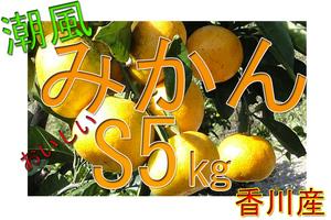 ■潮風みかん 早生 甘い 10㎏ S 送料込 香川県産