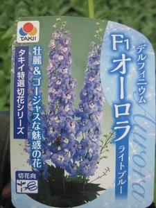 デルフィニウム『オーロラ ライトブルー』 9センチポット 耐寒性宿根草