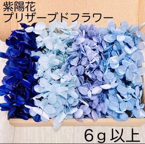 《SALE》紫陽花 アジサイ ブルーセット プリザーブドフラワー ハーバリウム 花材 レジン
