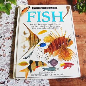 .。*゜+.*.。魚の知識本 イラスト 海の生き物図鑑 動物  洋書 ヴィンテージ本 イギリス 児童書 絵本