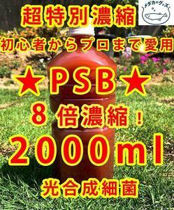 コスパ優秀★PSB 光合成細菌 超8倍濃縮2000ml送料無料★バクテリアメダカめだからんちゅう金魚熱帯魚ミジンコゾウリムシミドリムシ