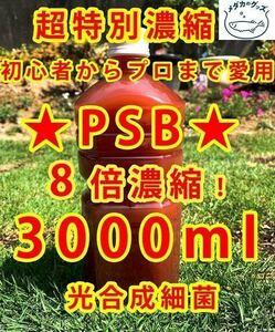 コスパ優秀★PSB 光合成細菌 超8倍濃縮3000ml送料無料★バクテリアメダカめだからんちゅう金魚熱帯魚ミジンコゾウリムシミドリムシ