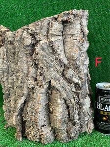 【全品 送料無料】コルク樹皮 キャノン型 色んなコルク出品中 ビカクシダ エアープランツ レイアウト 隠れ家 テラリウム 木 エアプランツ